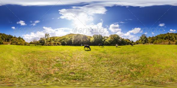 HDRI Grazing Cows Under Blue Sky