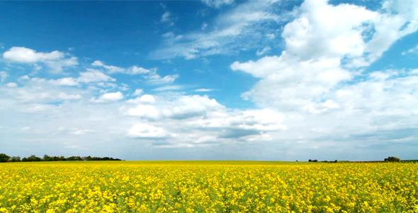 Summer Landscape 1