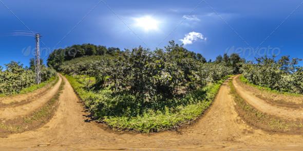 3DOcean HDRI Hazelnut Plantations In The Pathway Between 5249234