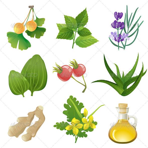 GraphicRiver Herbal Medicine 5252303