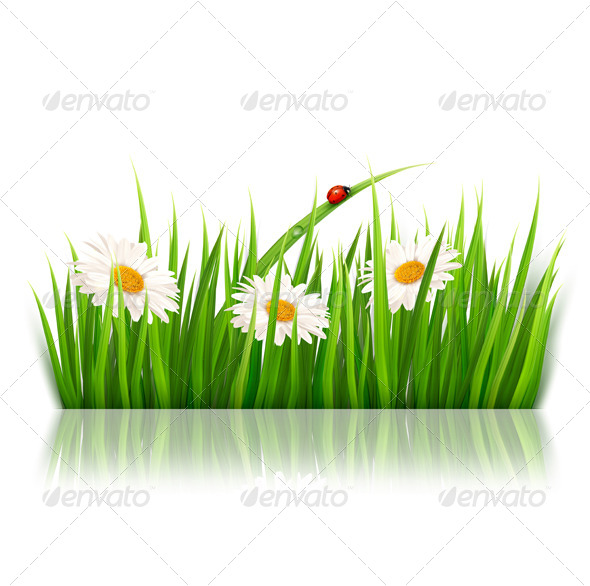 GraphicRiver Nature Background with Green Grass and Flowers 5255348