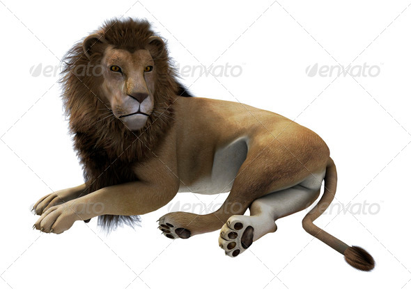 Lying Lion  - Stock Photo - Images