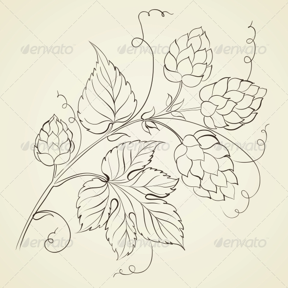 GraphicRiver Hop with Leaves 5263246