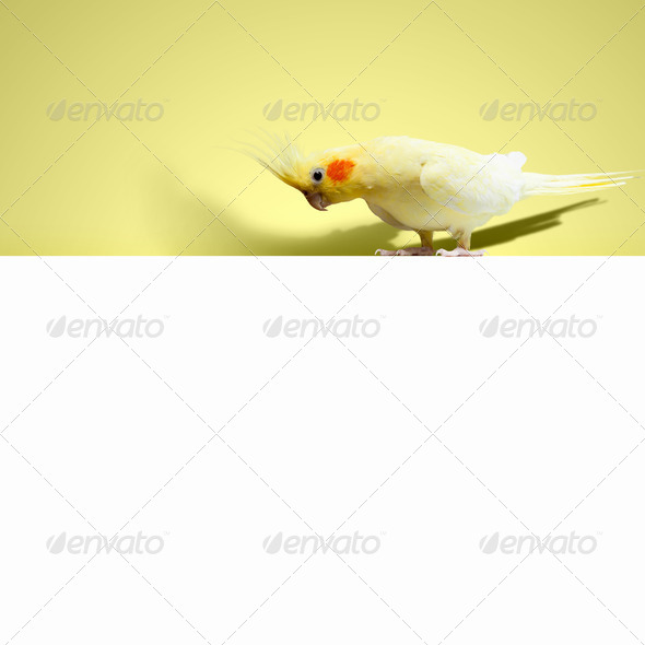 Parrot sitting on blank banner - Stock Photo - Images
