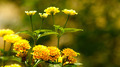 Golden Flowers - PhotoDune Item for Sale