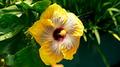 Tropical Beauty - PhotoDune Item for Sale