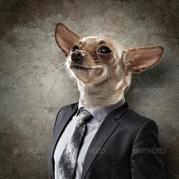 Funny portrait of a dog in a suit - Stock Photo - Images