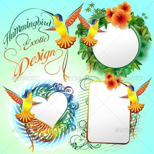 Hummingbird Exotic Designs