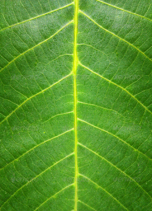 3DOcean Green Leaf HQ Texture 5224796