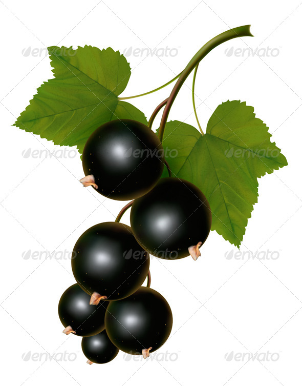 GraphicRiver Black Currants with Leaves 5296251