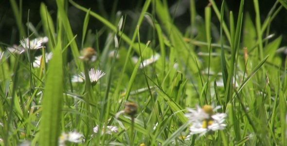 Wild Grass Field Close Up IV Loop