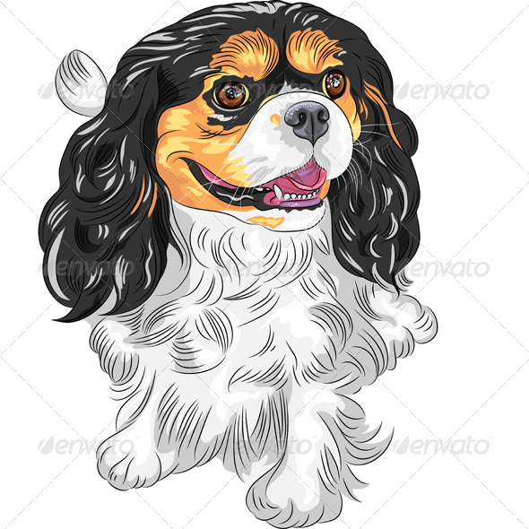 GraphicRiver Vector Dog Cavalier King Charles Spaniel 5299495