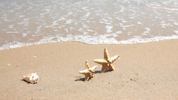 Starfishes On The Beach