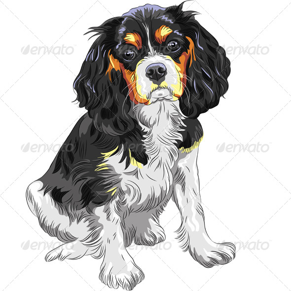 GraphicRiver Cavalier King Charles Spaniel Breed 5308469