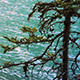 Windy Lake Trees (2-Pack) - VideoHive Item for Sale