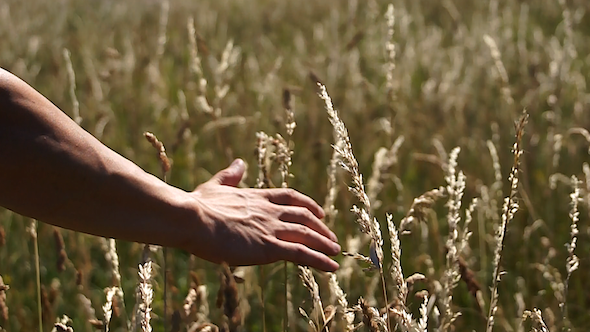 VideoHive Hand Through Fields 5312092