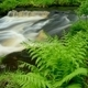 Ferns by Stream in the Forest - PhotoDune Item for Sale