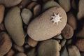 Starfish on Rock - PhotoDune Item for Sale