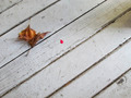 Old white wooden floor - PhotoDune Item for Sale