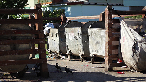 Birds and Garbage at Dumpsters