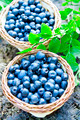 Blueberries baskets