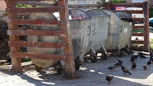 Pigeons at Dumpsters Yard