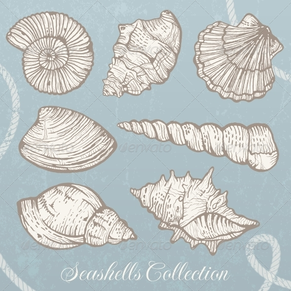 GraphicRiver Seashells Collection 5335652