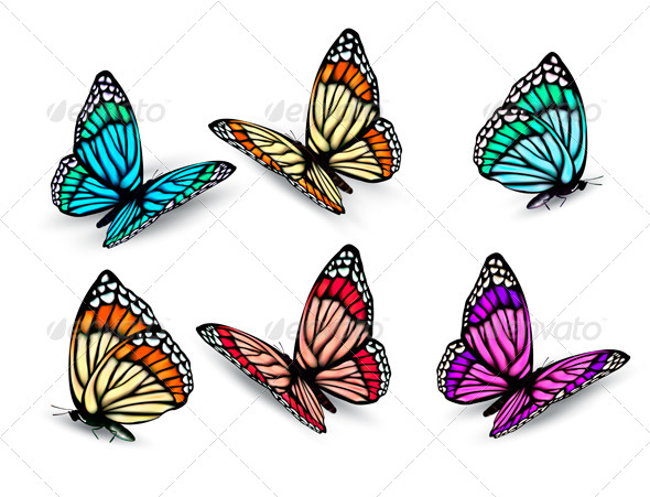 GraphicRiver Set of Realistic Colorful Butterflies 5337982