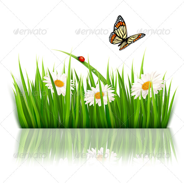 GraphicRiver Nature Background with Green Grass and Flowers 5338005