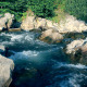 The Mountain River in the Forest - VideoHive Item for Sale