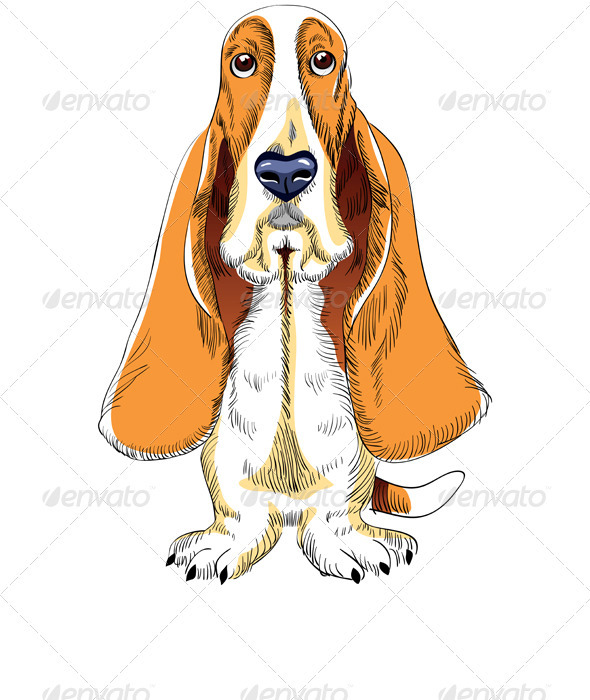 Dog Basset Hound breed
