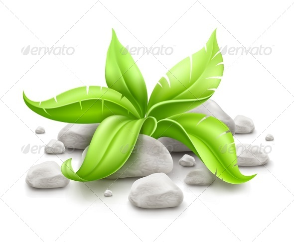 GraphicRiver Plant with Green Leaves in Stones 5343946