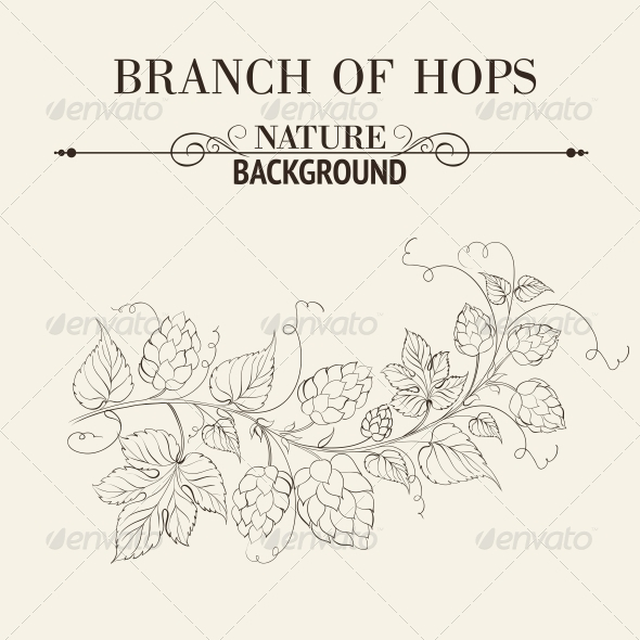 GraphicRiver Hops with Leafs Isolated on Sepia 5346985