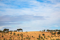 Olive trees landscape - PhotoDune Item for Sale