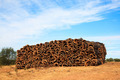 Pile of raw cork newly stripped from tree drying in the sun - PhotoDune Item for Sale