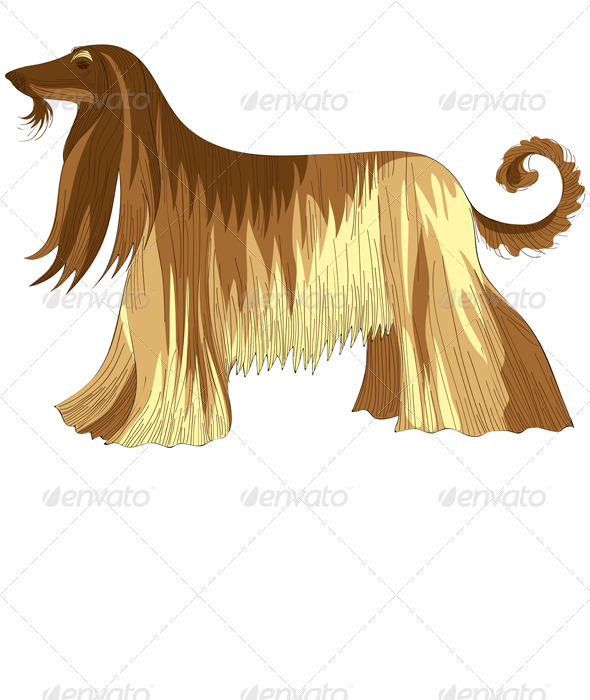 Graphic River Dog Afghan hound breed Vectors -  Characters  Animals 550268