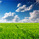 Field Of Green Ears - VideoHive Item for Sale