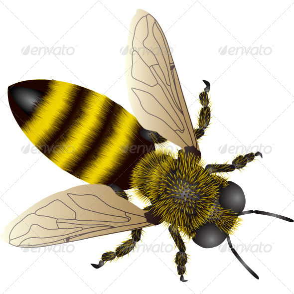 GraphicRiver Realistic Bee 5364433