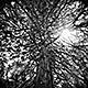 Ballad of the Tree