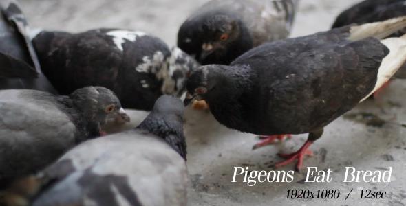 Pigeons Eat Bread 3