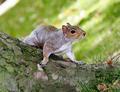 Startled Squirrel - PhotoDune Item for Sale