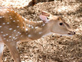Deer close-up - PhotoDune Item for Sale