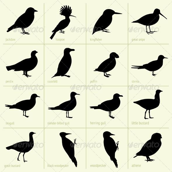 GraphicRiver Birds 5388191