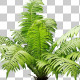 Real Plant Fern - VideoHive Item for Sale