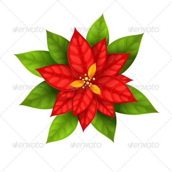 GraphicRiver Christmas Star Flower Poinsettia Isolated 5393958