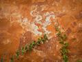 Grunge garden wall - PhotoDune Item for Sale