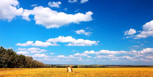 Summer Landscape 16