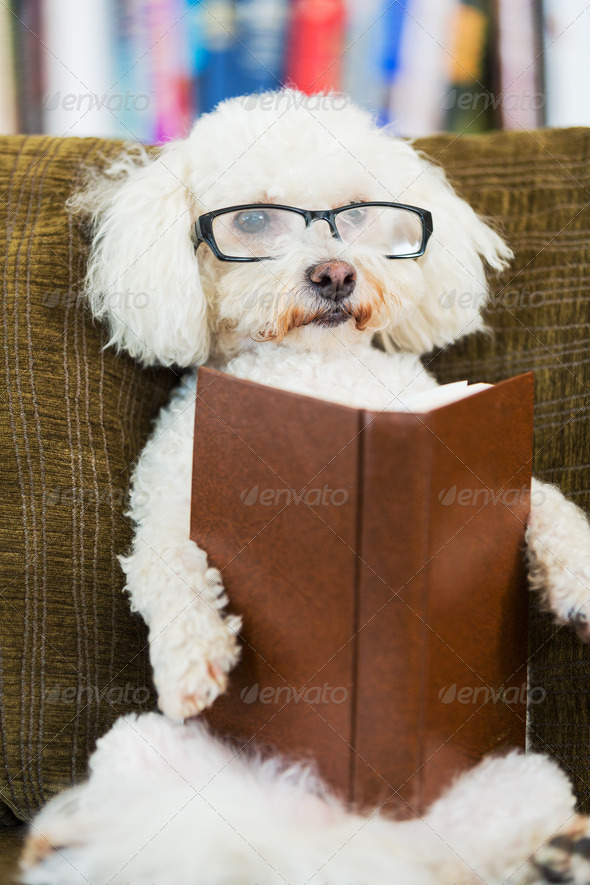 Dog Reading Book - Stock Photo - Images