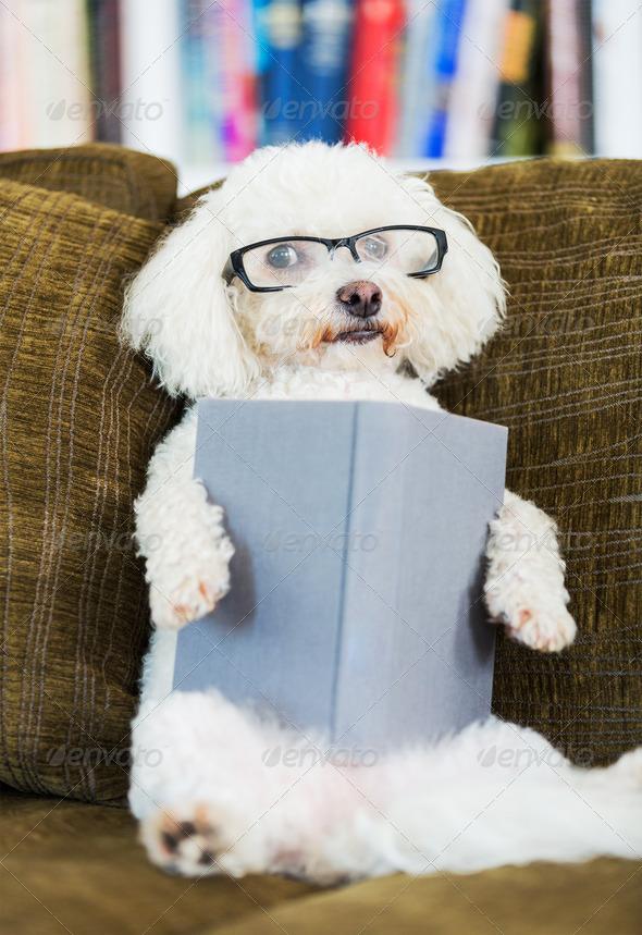 Dog Reading Book - Stock Photo - Images