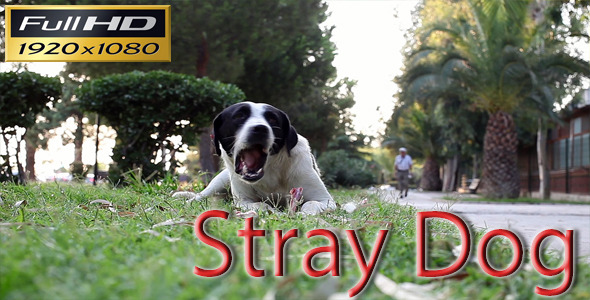 Stray Dog Eating a Bone